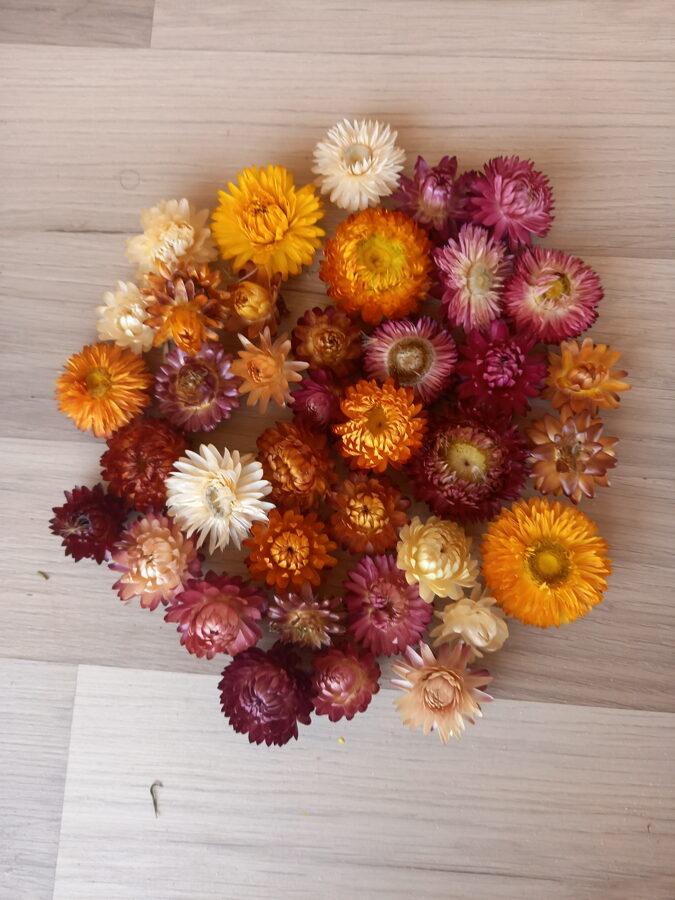 Kaltētu krāsainu salmeņu ziedi