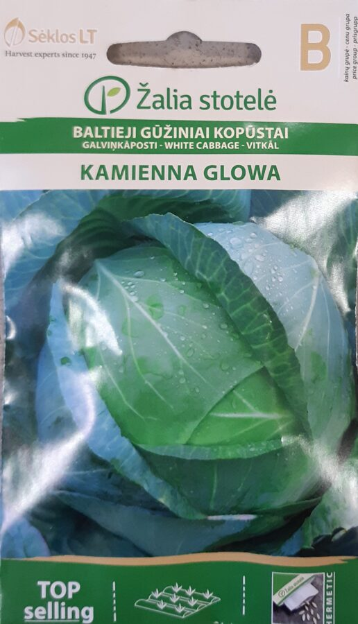 Galviņkāposti Kamienna Glowa