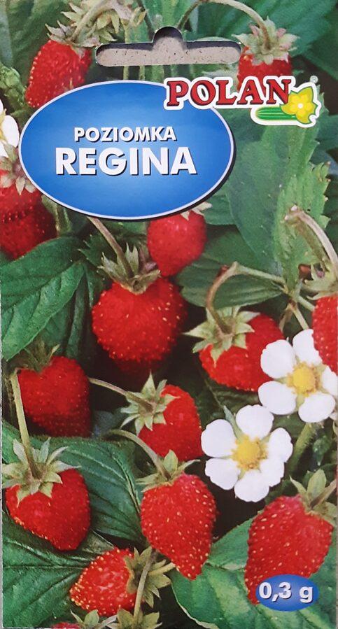 Zemenes Regina